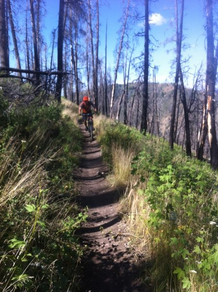 Cranking past death and re-birth on Warm Springs Trail