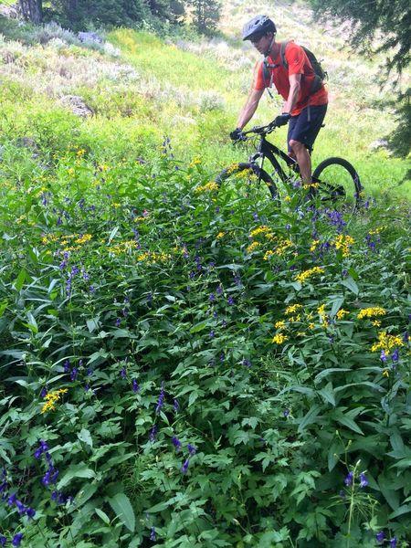 Abundant wildflowers on Titus Lake
