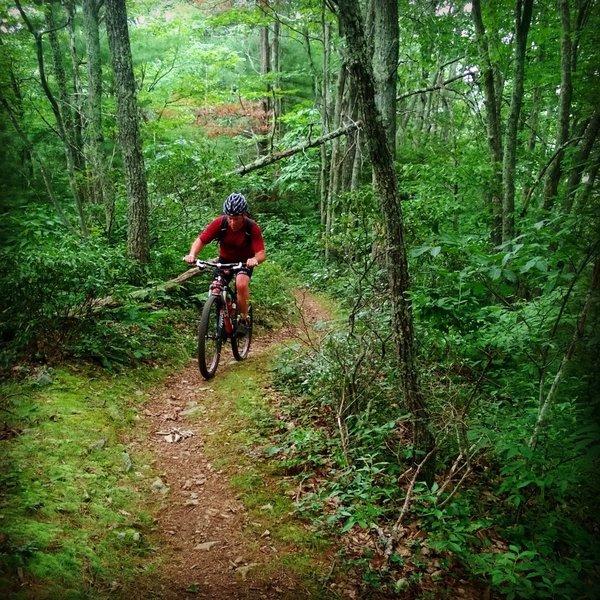 Iron Mountain Trail ridge riding!