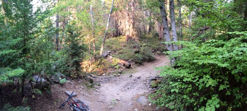 Abbot Creek - dry in late July