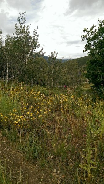 Wildflowers at the trail junction