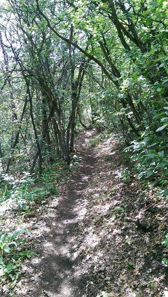 Scrub tree canopy lines the Upper Village Trail