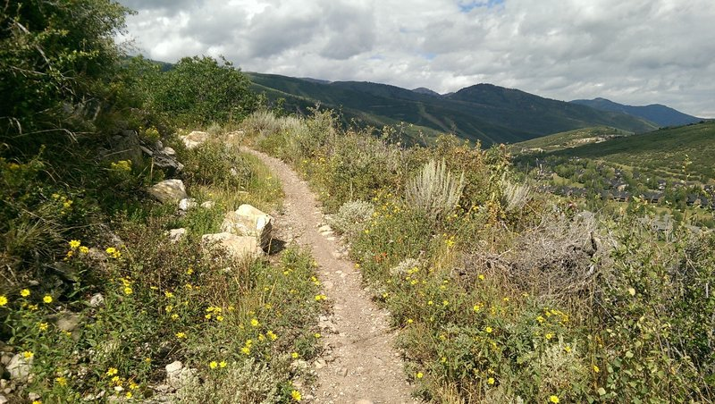 Scattered wildflowers on Mid Gap Trail
