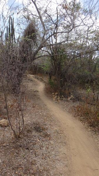 Pinchos Trail