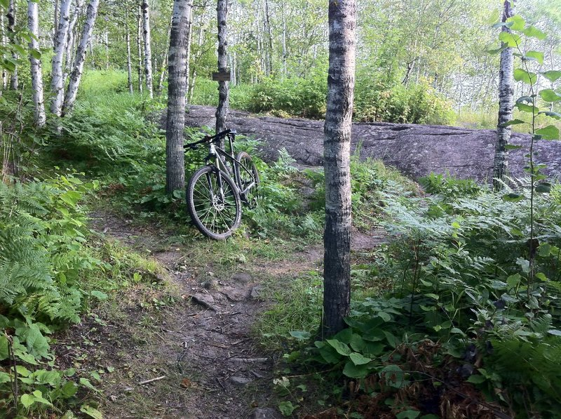 Fork in Merritt Creek trail (this section rides best clockwise)