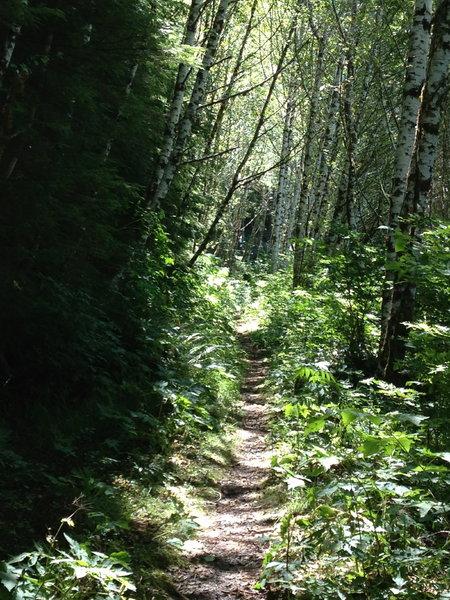 Cummins Creek trail near Cummins Peak Road trailhead