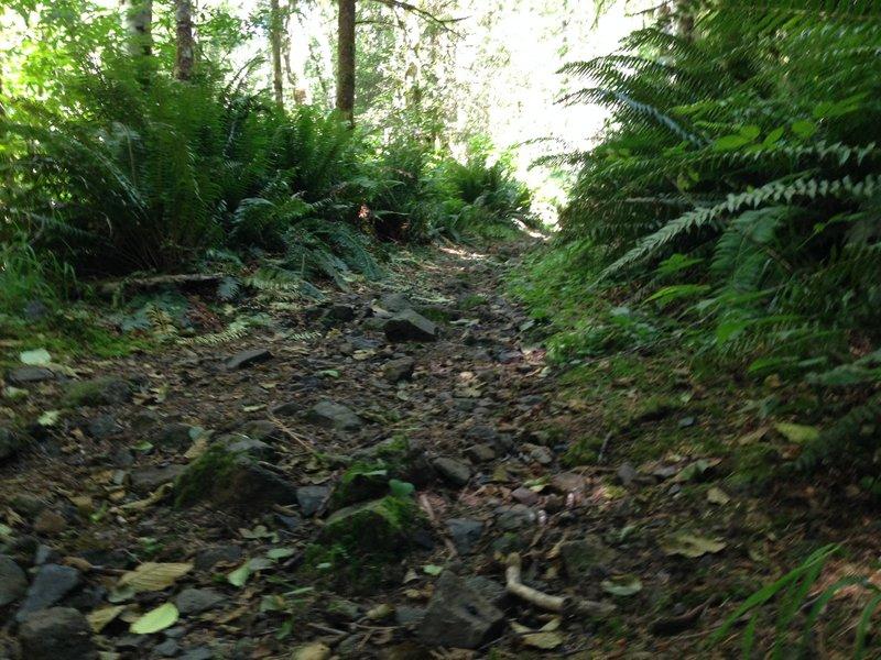 Bumpy climbing up the Cummins Creek trail