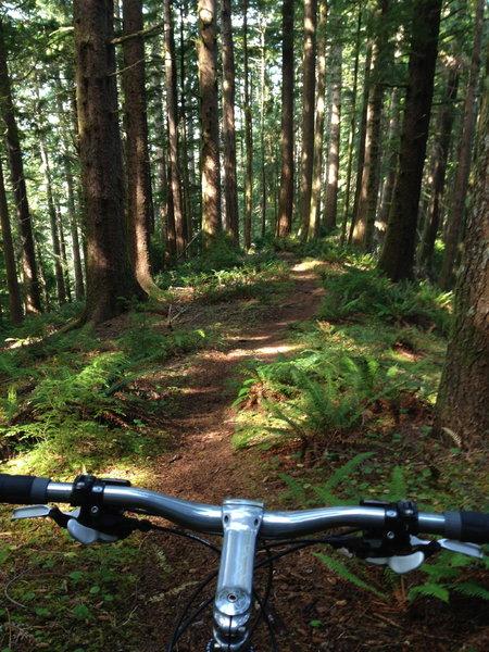 Heading down the ridge on Cummins Creek Loop trail