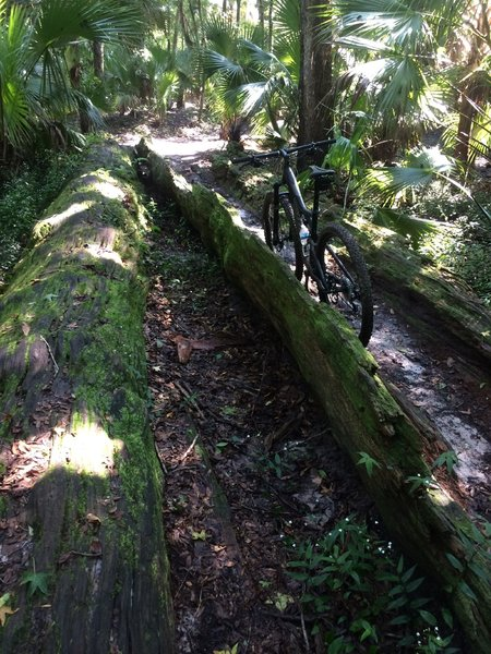 An alternate route comes back to the main trail through this half tree trunk.