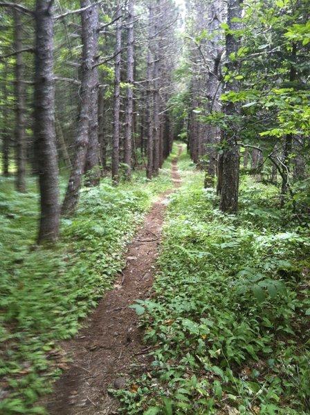 Free Rider Trail At Fitzpatrick Mountain, Scotsburn, Nova Scotia.