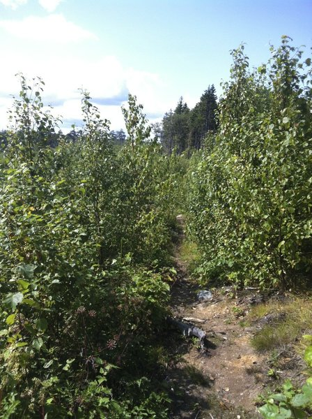 Clearcut Crossover at Spider Lake Trails