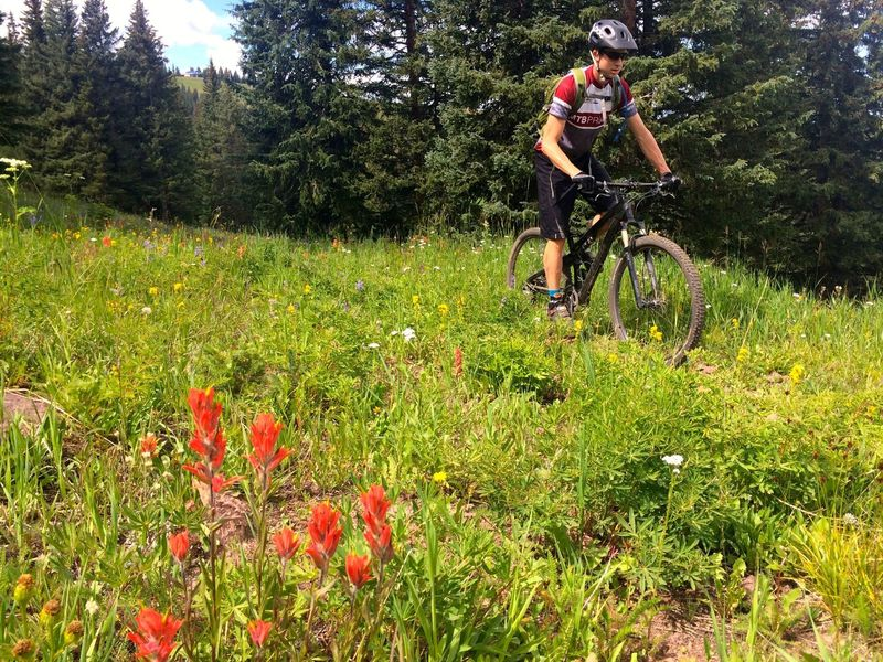Wildflowers on Mid Vail Escape