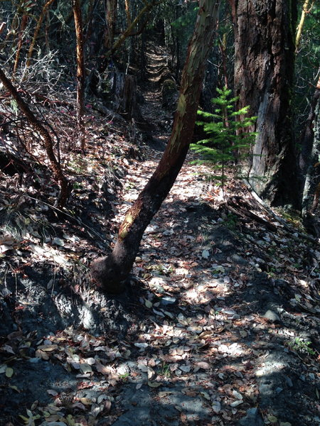 Steep, narrow singletrack leading to the top of Upper Twin Peak