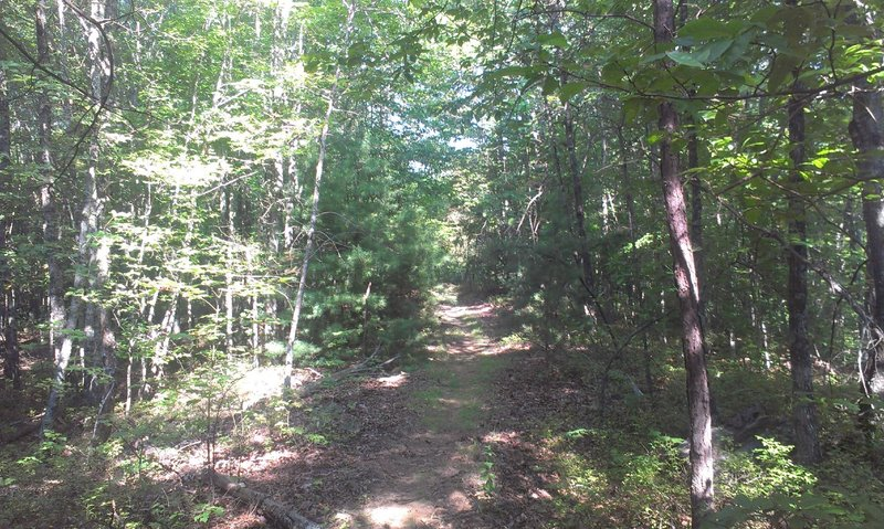 Mixed hardwood/pine forest area.