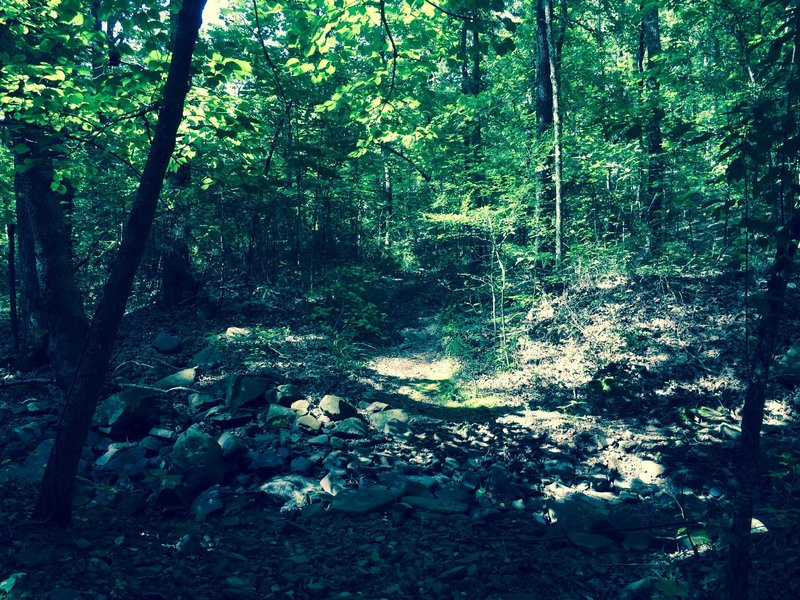 Dogwood dry creek crossing.