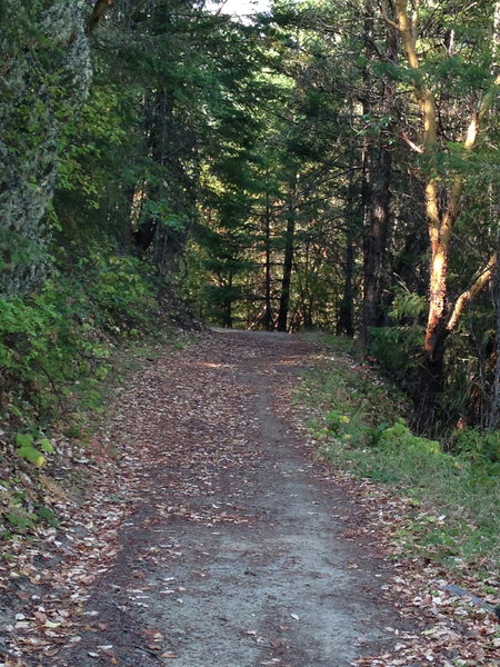 Twin Peaks Trail leading to the saddle