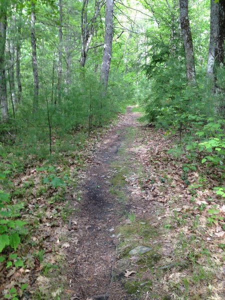 Easy riding through dense woods down a gentle incline gets you back to the Rail Trail