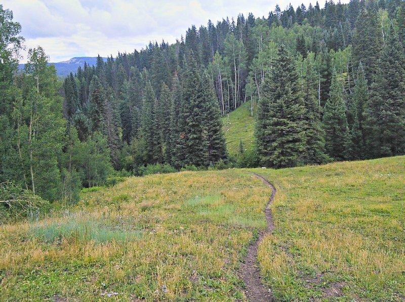 Descending through meadow in Deer Lick Creek drainage