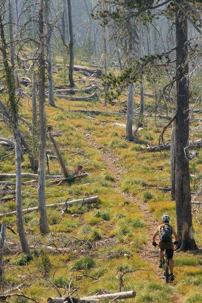 Divide Trail on the Idaho-Montana border near North Fork Idaho.