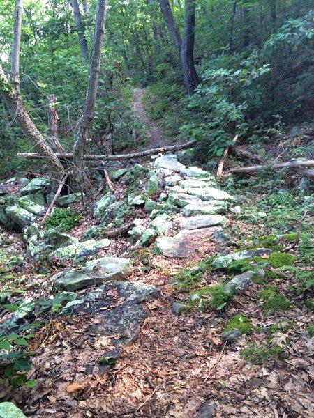 Near the start of the Massanutten Trail heading northeast
