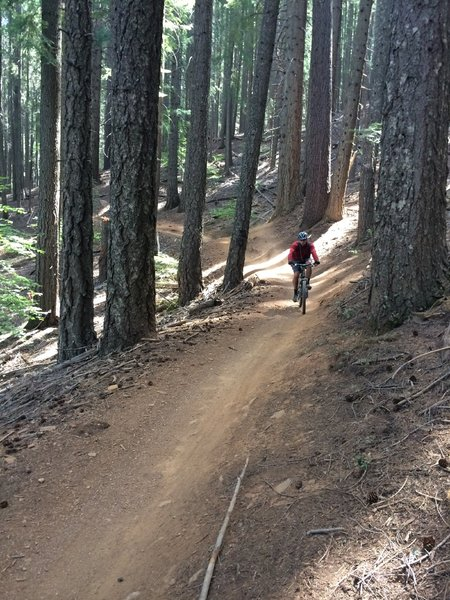 Fast and smooth section of Third Divide Trail.