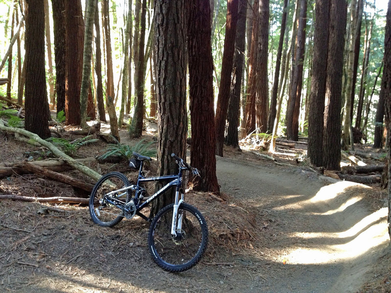 Lots of fun banked curves in the eponymous redwoods.