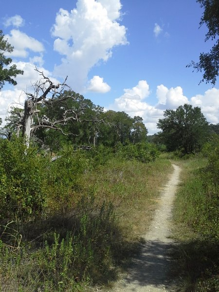 Goodwater Loop near Tejas Campground