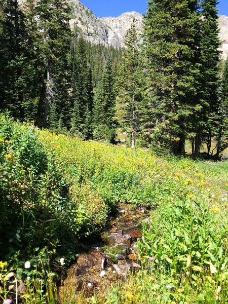 More streams and wildflowers as the grueling climb continues.