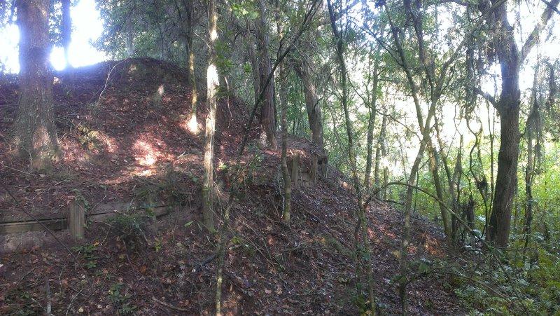 Balm Boyette Scrub Trail