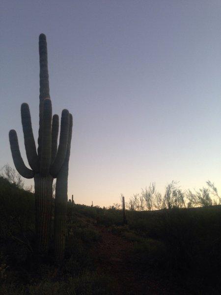 Sun rising over the desert