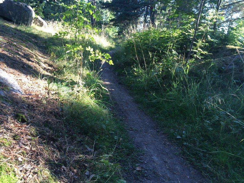 As you see the surface is suitable for sunday rides and beginner´s mountainbiking.