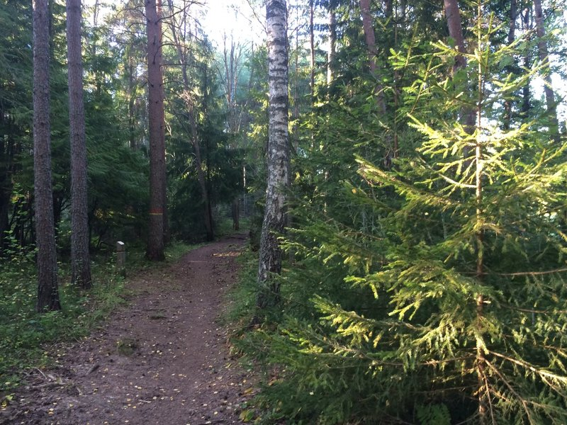 Swedish forest. Great feeling.