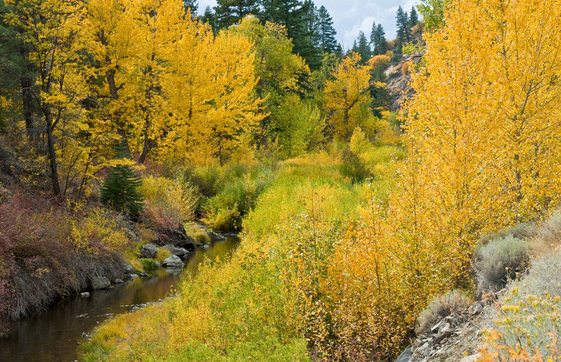 Fall color on Bizz Johnson Nat Rec Trail