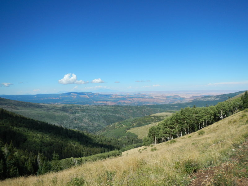 The upper part of the Robertson Pasture Trail descent alternates between spectacular views across Canyonlands National Park and dark forest sections reminiscient of British Columbia or California redwood groves.