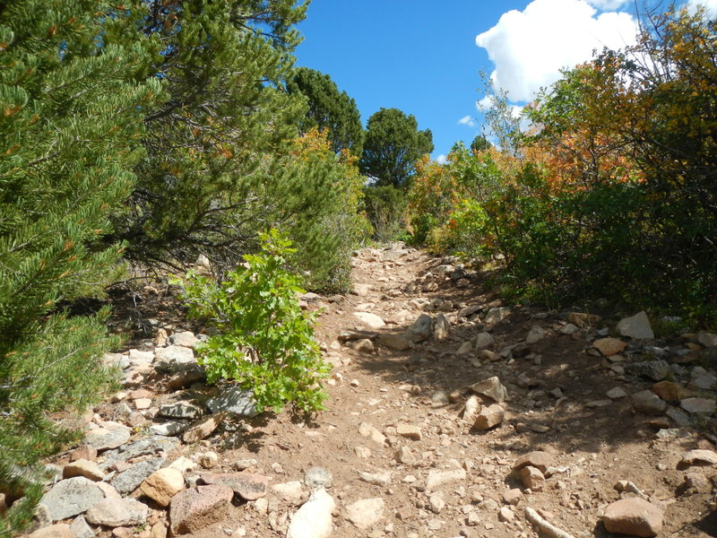 As you approach Foy Lake (a/k/a Spring Lake on some maps), there are a handful of difficult rocky climbs. But they're short.
