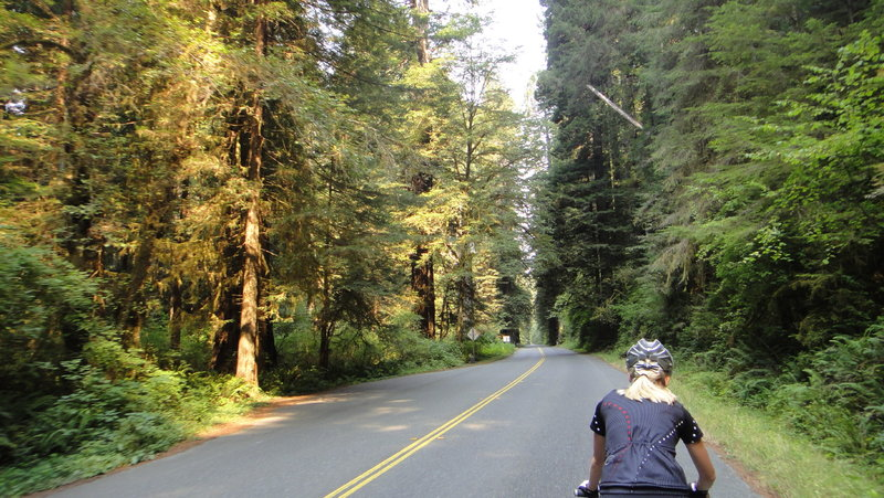 Usually little traffic on this paved road segment with beautiful Redwood trees left and right.