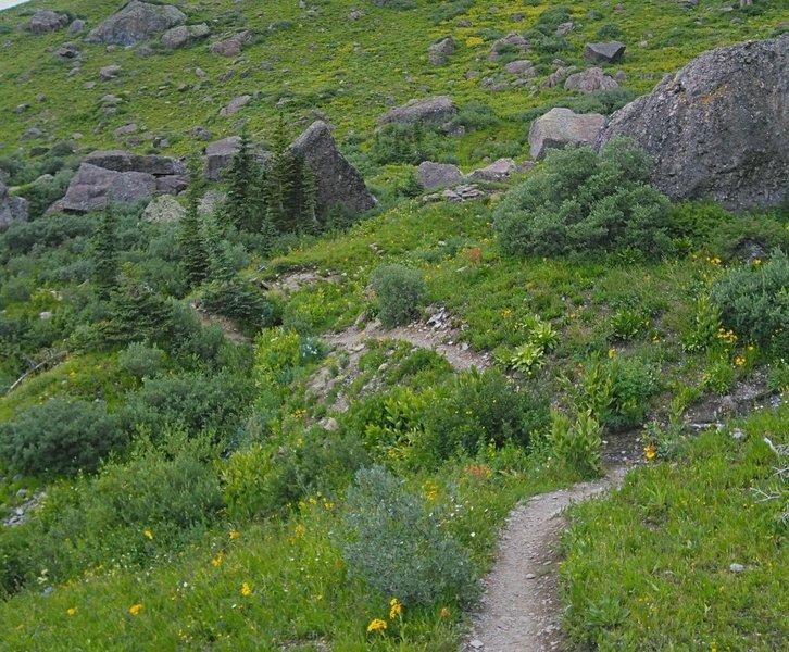 Winding meadow trail below Twin Sisters East