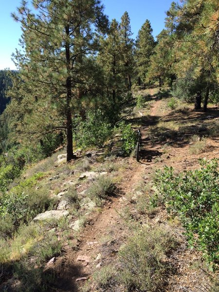 One of the smoother sections of the east side of Lower Rim Trail.