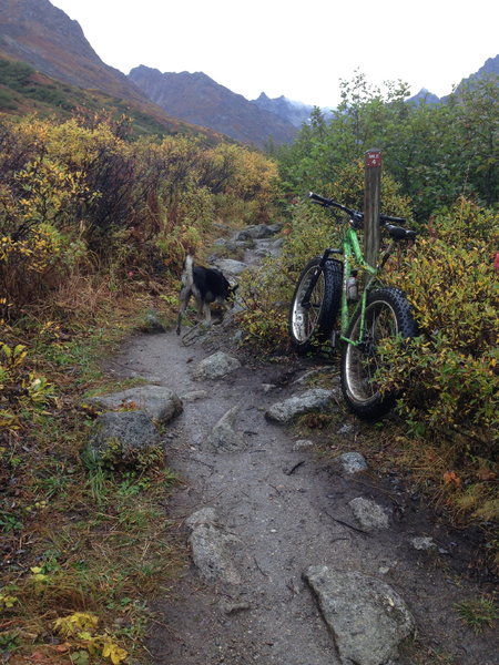 Another one of the rocky sections on Gold Mint Trail.  Mile marker 4