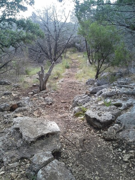 One of the few technical sections just west of the Russell Park Trailhead