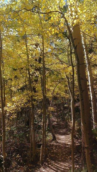 Betty's Trail