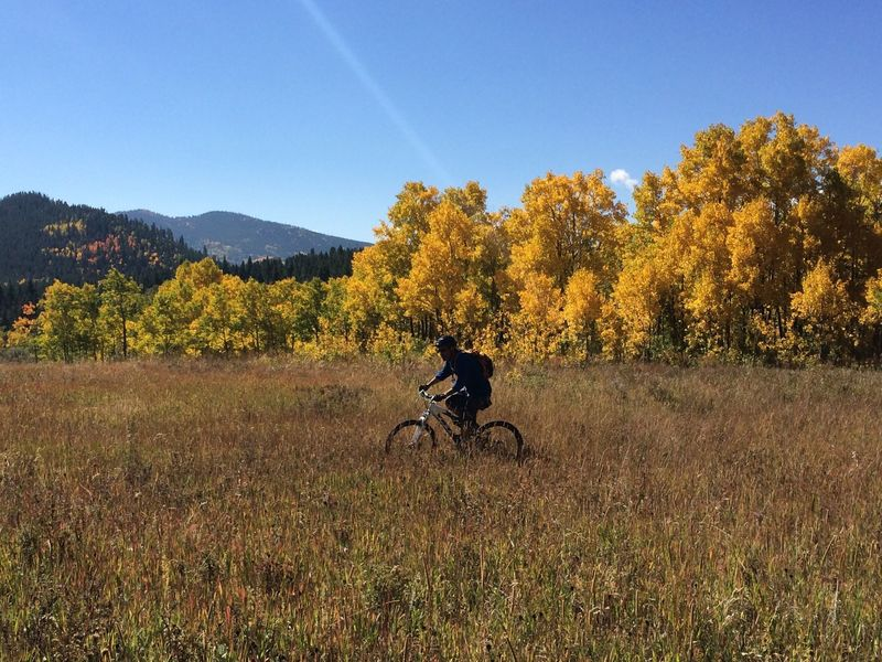 Big meadows and aspens in September