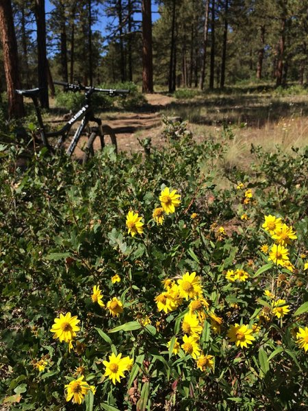 Wildflowers abound along the flowing, smooth singletrack of Turkey Springs.