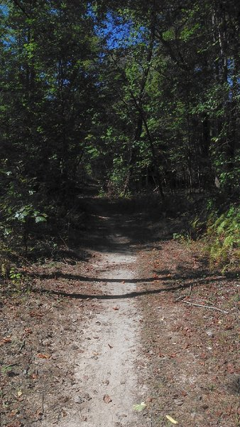 Through the woods, pleasant ride on fairly easy and flat singletrack