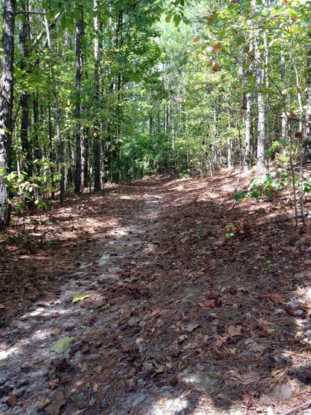 Singletrack with lots of leaves and pine straw.
