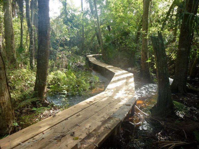Bridge built by the EEL group volunteers