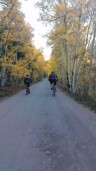 Boreas Pass Road aspens