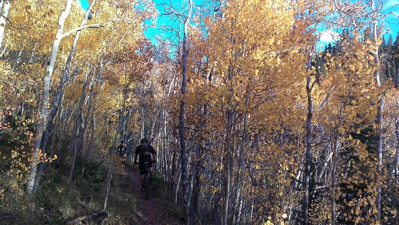 Aspen Alley - unbelievably, soon to also be a great climb!