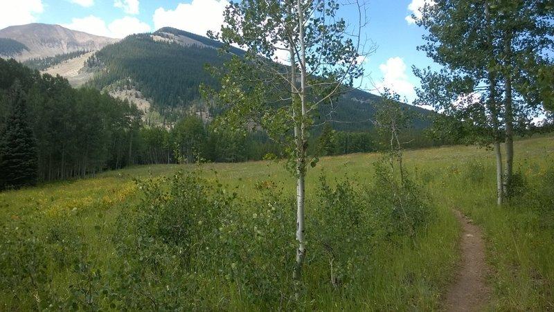 Carbon Trail, looking south toward Carbon Peak.
