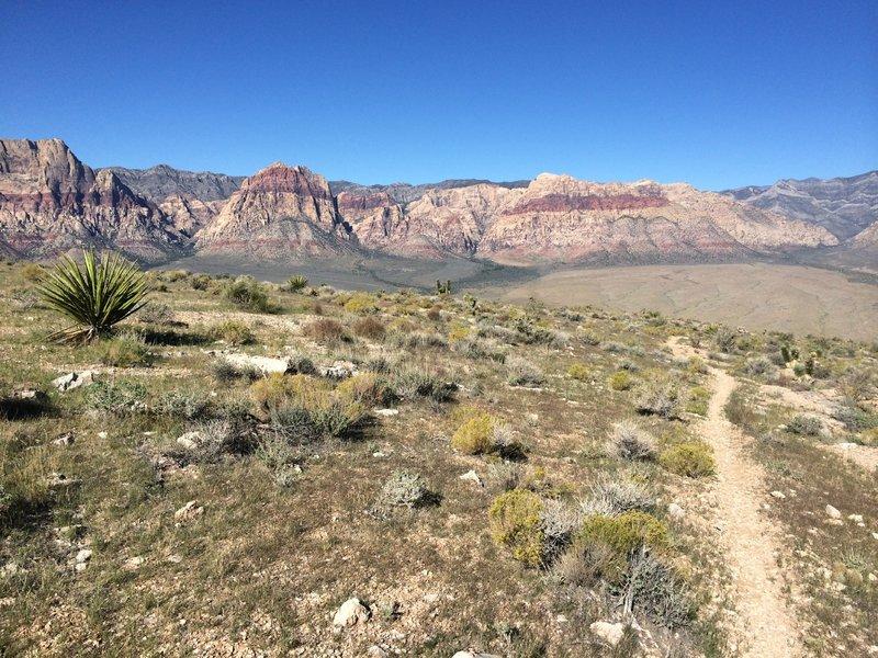 Bone Shaker trail....looks easy, huh!